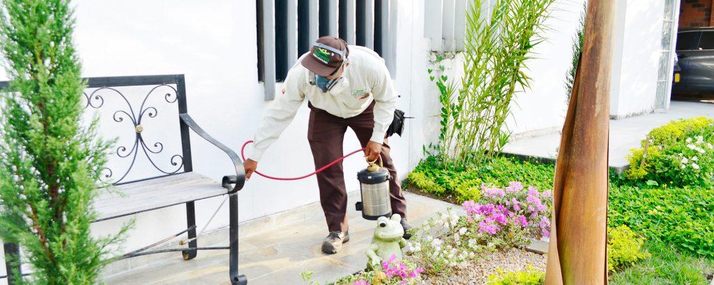 Control de termitas en Cali - Desinfección en Cali